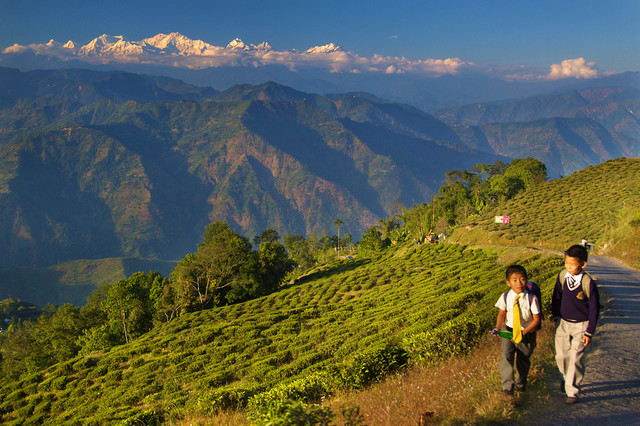 Living on Mountains of Tea - Darjeeling, India
