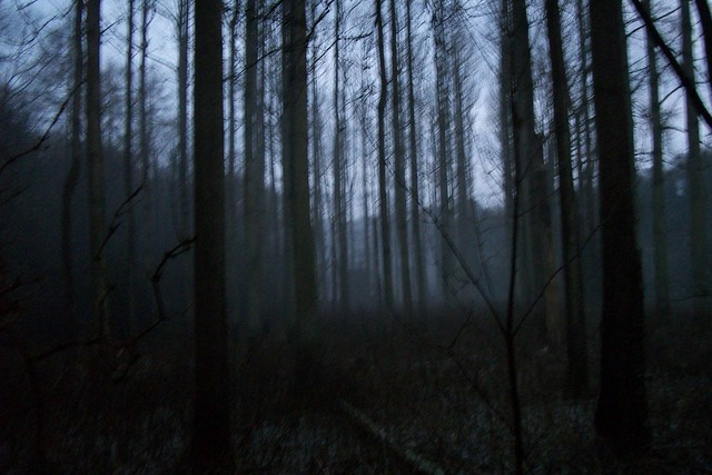 THE WOODS AT DUSK 1 Flickr Photo Sharing