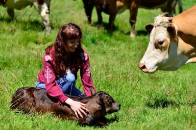 newborn baby calf