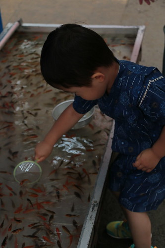 Live fish at a street festival