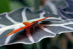 Moth, by Silvia Kliese
