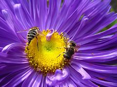 Bees, by Igor Sherbakov