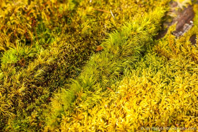 Moss Caterpillar
