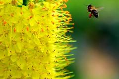 Bee, by Natureloving