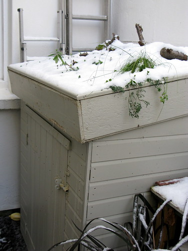 A green roof...white