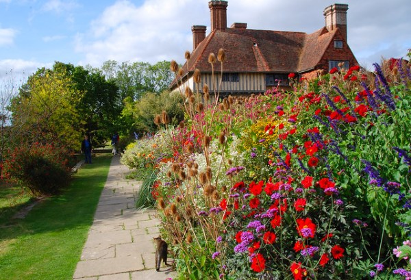 Cat Among the Pigeons at Great Dixter!