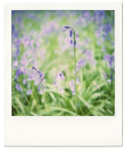 Polaroid #1