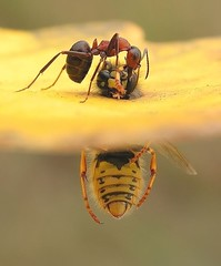 Ant and Bee, unknown