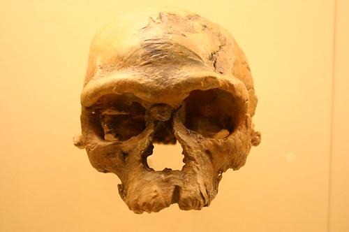 Homo Sapiens 160,000 Years Old