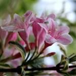 Flowers @marlay_park , Dublin - Ireland. ◔‿◔ ღ.