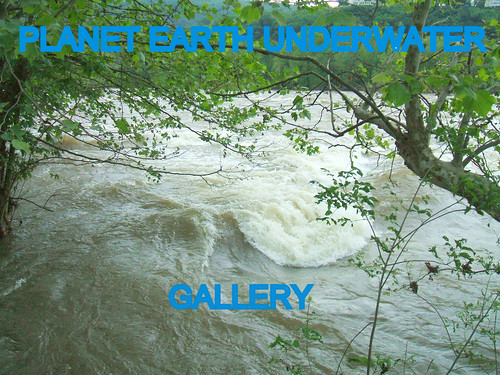 PLANET EARTH UNDERWATER group gallery. Showcase galleries on display in PLANET EARTH NEWSLETTER. New Updates ck. them out.