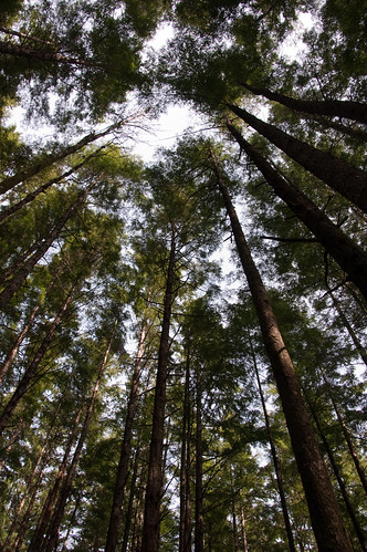 Trees in McClymont Park