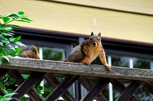 An image of a squirrel with personality