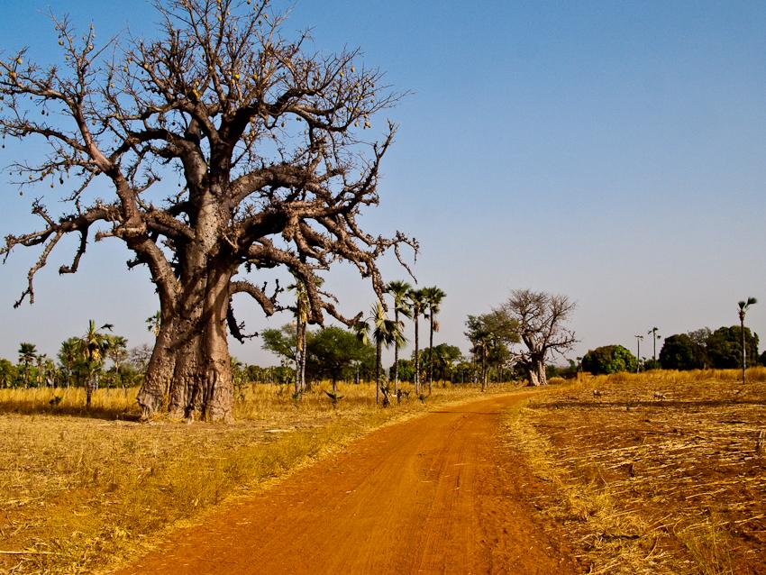 Landschaft mit Baobab