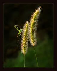 Nature, by Razaq Vance