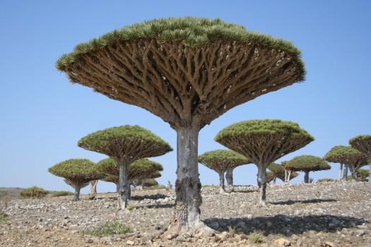 Socotra 197