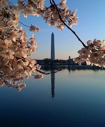 Cherry Blossom Goodness