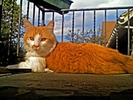 my cat Luca is HDR-o-genic