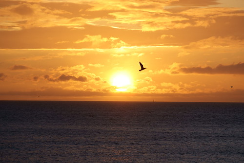Sunrise Bird rise