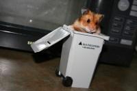 Como hamster