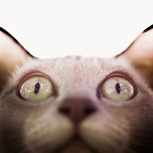 Cat / Animals by ►CubaGallery