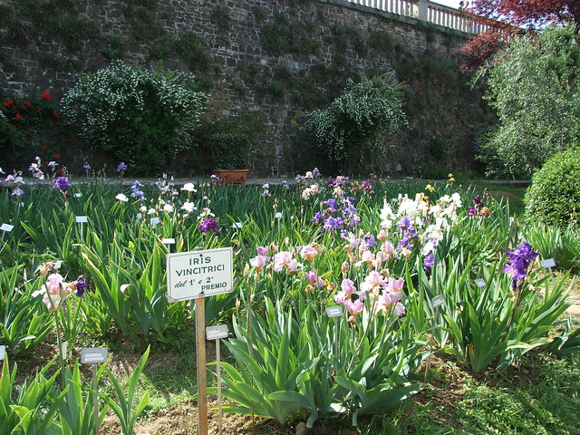 Florence Iris Garden 1 by jen-the-librarian, on Flickr