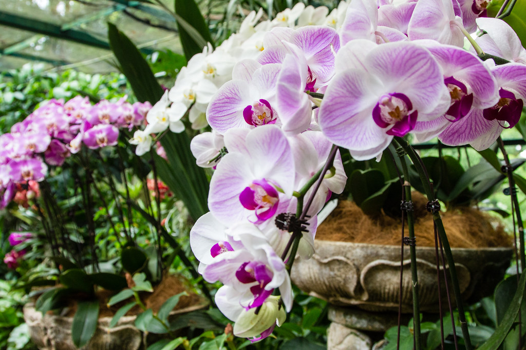 National Orchid Garden - Singapore Botanic Gardens