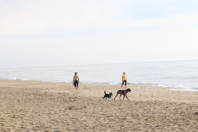 dogs-beach-walk-7