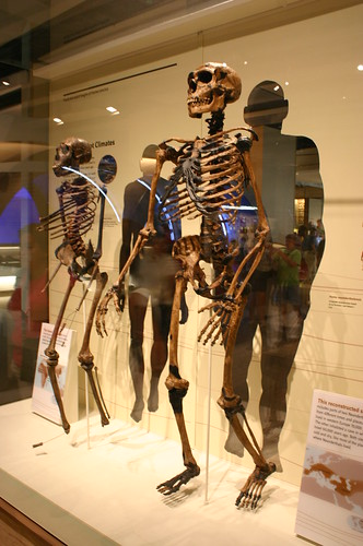 Adapted to Hot and Cold Climates, Homo Erectus and Homo neanderthalensis