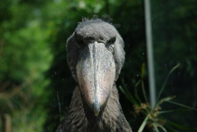 Image result for evil birds