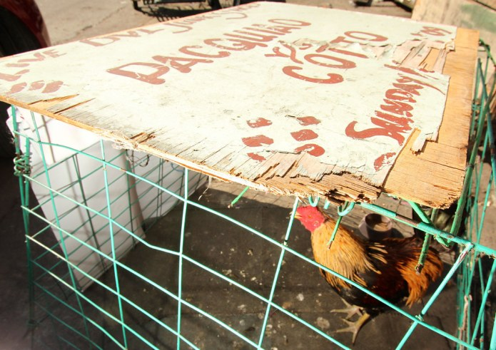 chicken coop with Pacquiao vs. Cotto sign board as roof