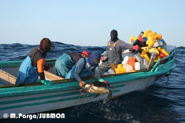 Pescadores subiendo una tortuga a bordo