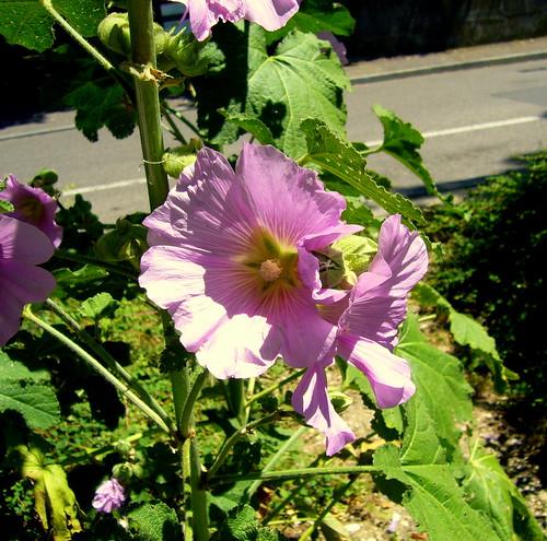 Blumen am Rheinweg por relibu