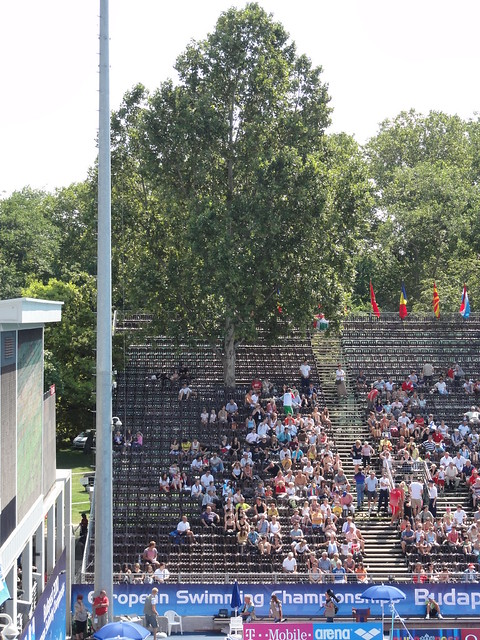 A tree up through the Budapest 2010 spectator stands