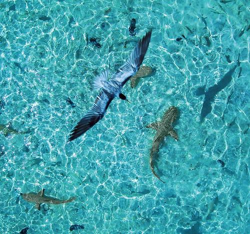 Une sélection de photos aériennes par cerf volant