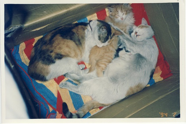 baby ping, mama, and strawberry, and baby kitten