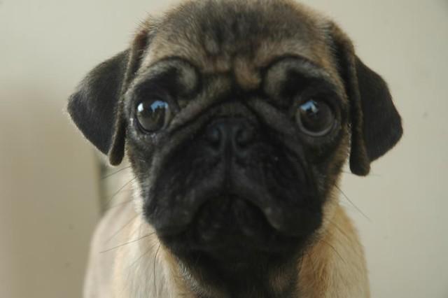 Curiosity - the puppy instinct