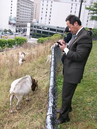 city goat