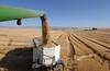 wheat0255LK