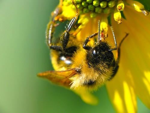 Bee and Flower macros