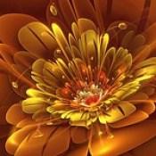 flowers wallpaper - 3d abstract wallpaper hd best.