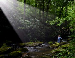 Smoky Mountains Light in the Forest