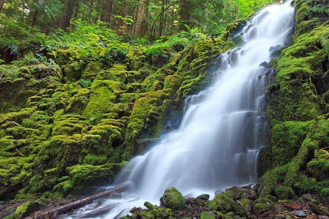 White Branch Falls