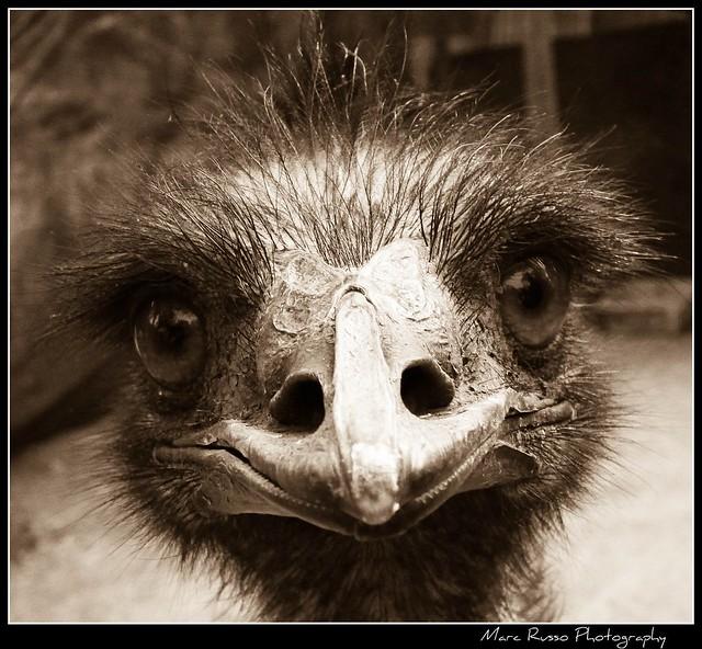 Mr Emu