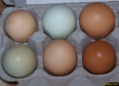 Farmer's Market Eggs