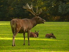 Red Deer father