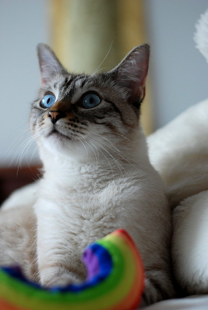 7-5-10 chun rainbow
