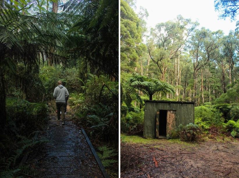 Yarra Ranges National Park, Australien