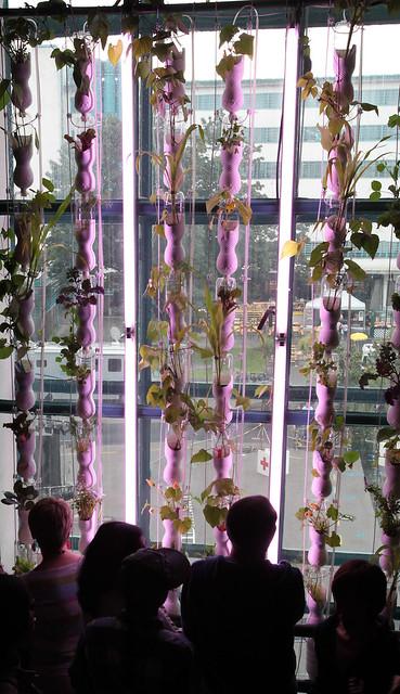 The Windowfarms Project / Britta Riley