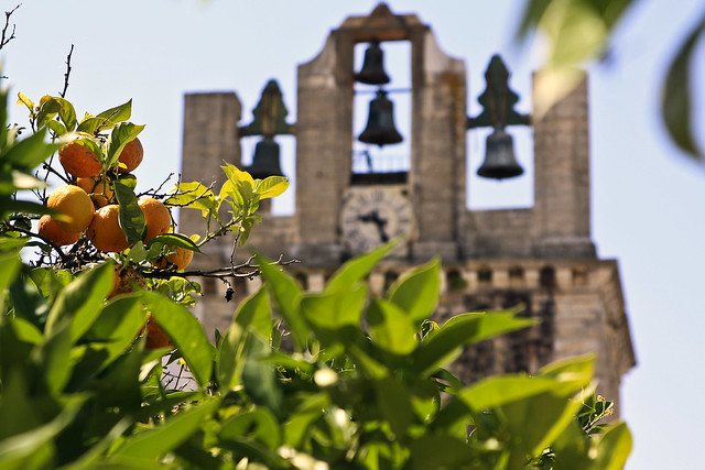 Orange tree in front of Sé Cathedral